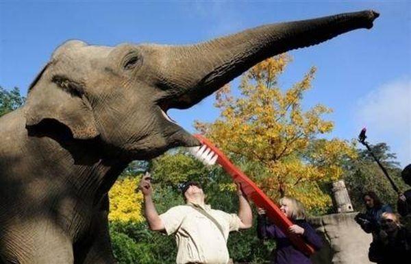 poze haioase animale elefant reclama