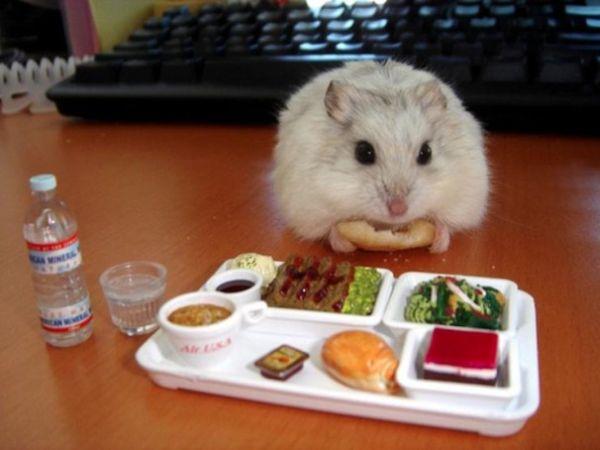 poze haioase animale hamster masa