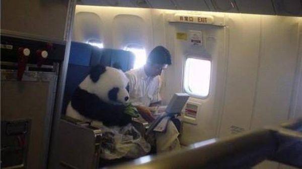poze haioase animale panda avion