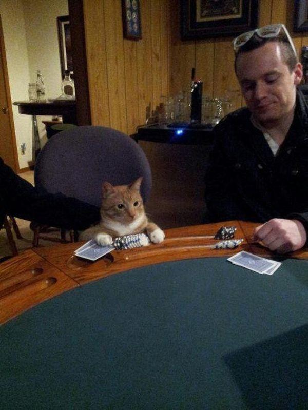 poze haioase animale pisica poker