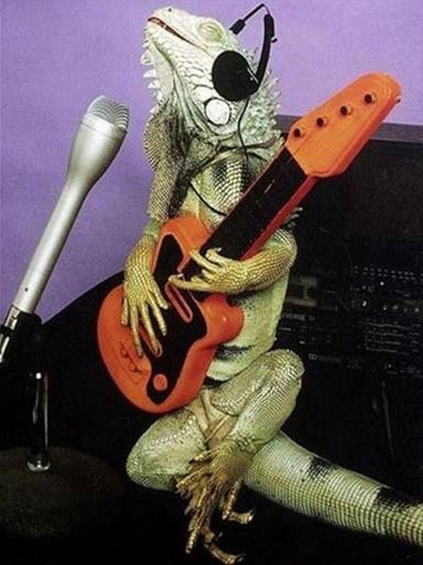 poze haioase animale soparla chitara