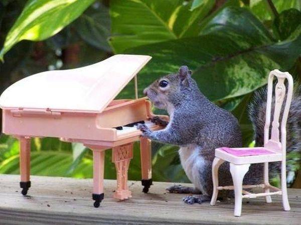 poze haioase animale veverita pianista