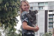maria sharapova koala brisbane tenis
