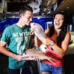 POZA ZILEI, 6 ianuarie 2015: Lucie Safarova și Adam Pavlasek s-au îndrăgostit de pești la Cupa Hopman