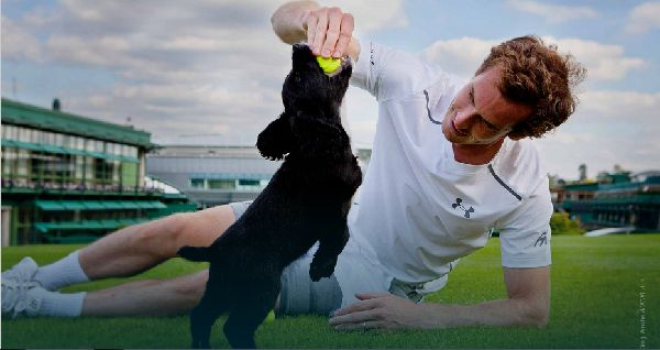 andy murray catel wimbledon