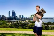 andy murray perth koala hopman