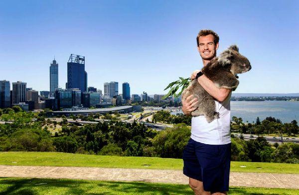 andy murray perth koala hopman
