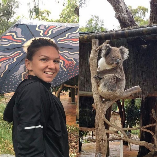 simona halep langa koala