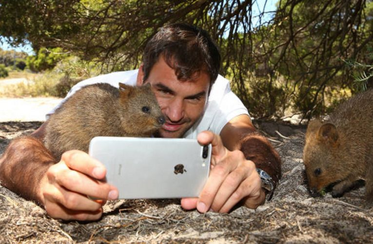 roger federer hopman cup perth animale 2